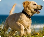 Holiday cottages in Fife which allow pets