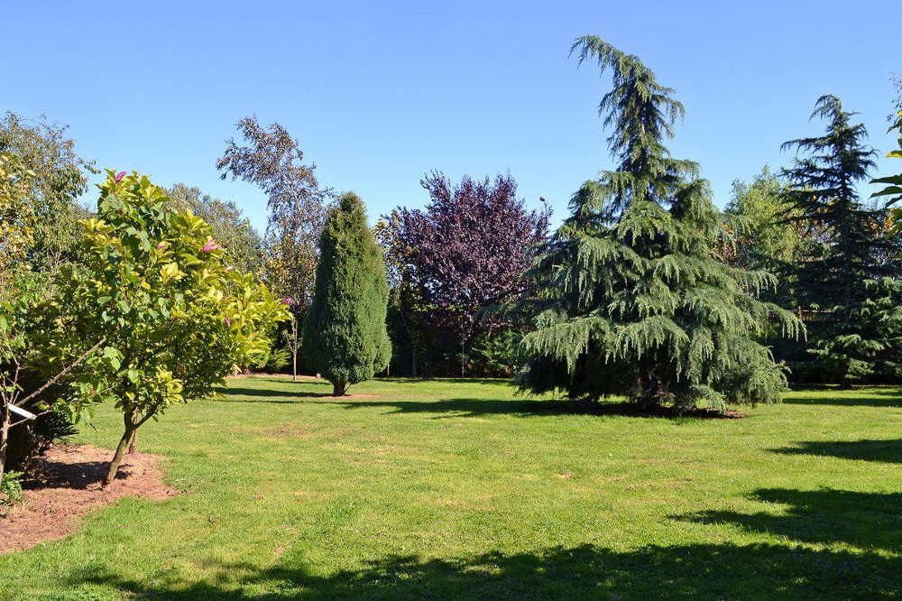 The lawned garden at Redmoor House in Wisbech