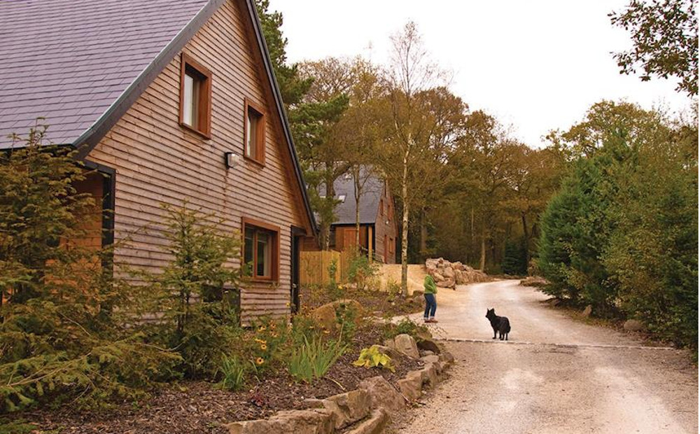 The setting of the lodges at Ramshorn Estate Woodland Lodges near Alton Towers